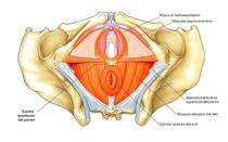 Unidad de Suelo pélvico de fisioterapia